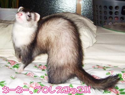 momo_genki02.jpg