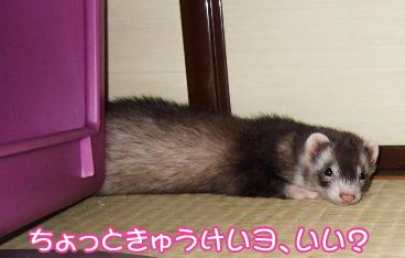 momo_genki05.jpg