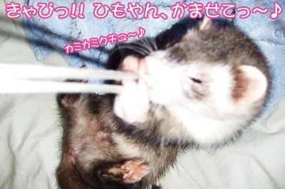 momo_himo01.jpg