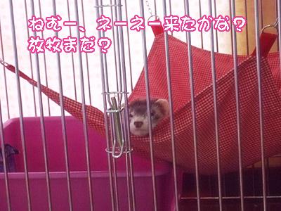 momo_houbokumachi1.jpg
