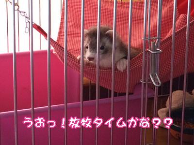 momo_houbokumachi2.jpg