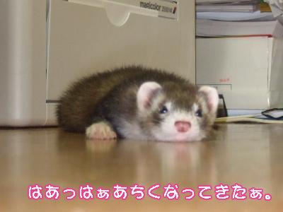 momo_ikigire1.jpg