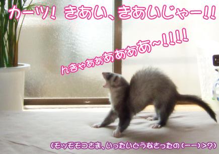 momo_morning1.jpg