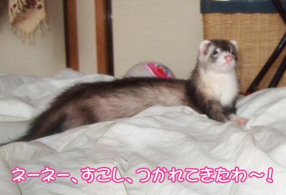 momo_morning3.jpg
