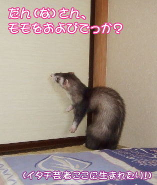 momo_morning4.jpg