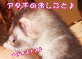 momo_nikka1.jpg