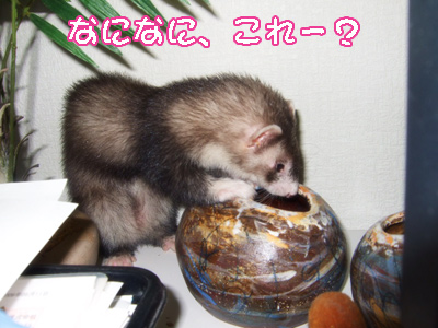 momo_noboru02.jpg