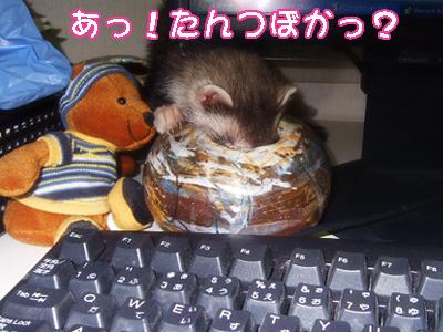 momo_noboru03.jpg