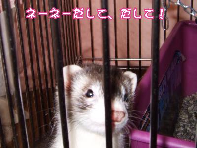 momo_onedari01.jpg