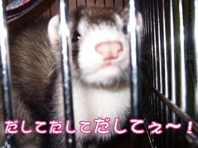 momo_onedari2.jpg