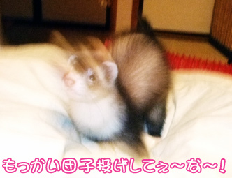 momo_play2.jpg