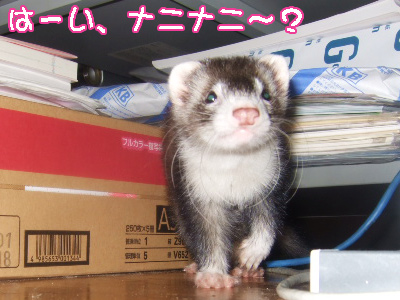 momo_printer1.jpg