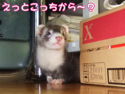 momo_printer2.jpg