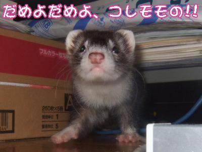 momo_printer4.jpg