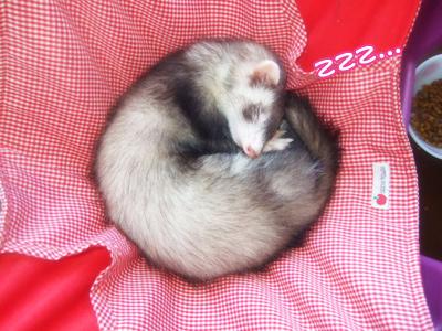 momo_sleeping813.jpg