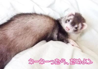 momo_sleepy3.jpg
