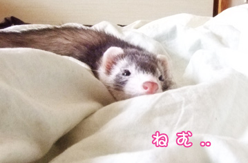 momo_sleepy4.jpg