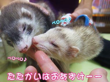 momo_teru822-1.jpg