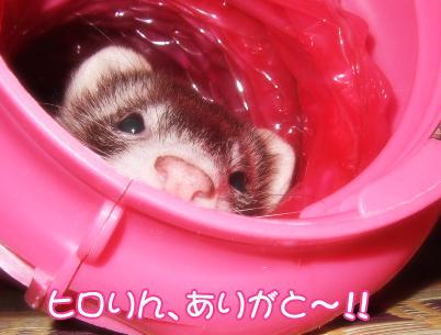 momo_thankyou01-.jpg