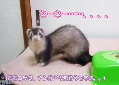 momoko907-4.jpg