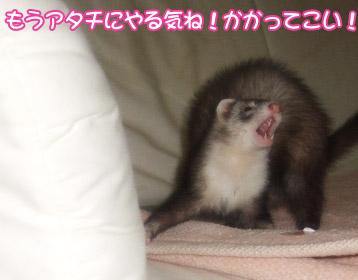 momoko911-1.jpg