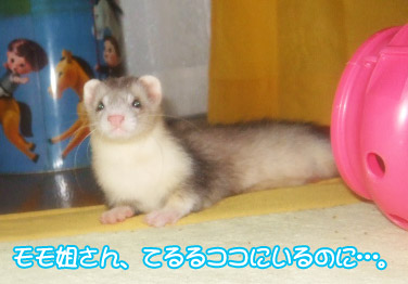 momoko911-3.jpg