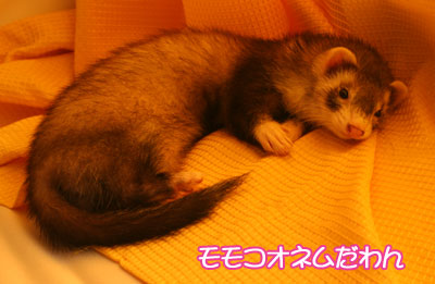 momoko923-1.jpg