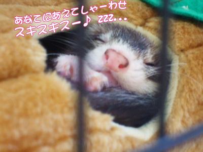 momoko_829-4.jpg