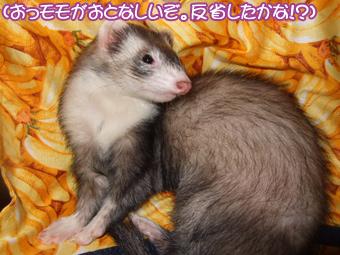momoko_banana02.jpg