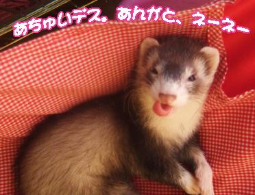 momoko_neoki.jpg