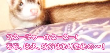 momoyakko-02.jpg