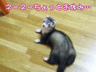nene_break.jpg