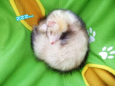 teru_sleeping813.jpg