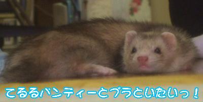 teruru_823-6.jpg