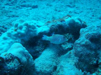 diving4.jpg