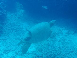 diving5.jpg