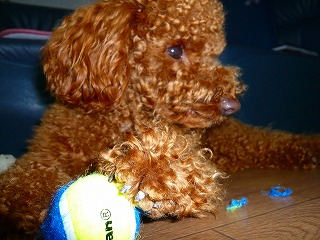 ボール遊び?・・1