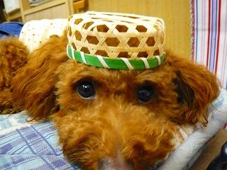 新作帽子・1