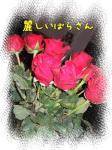 薔薇が好き(*´ -`)(´- `*)ウットリ・・・