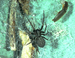back house spider