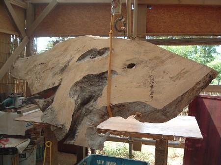 橡(とち)の木、原板