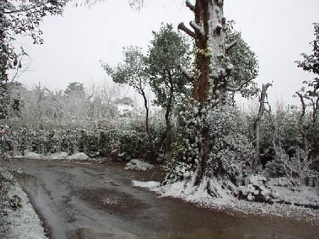 雪化粧~庭先にて