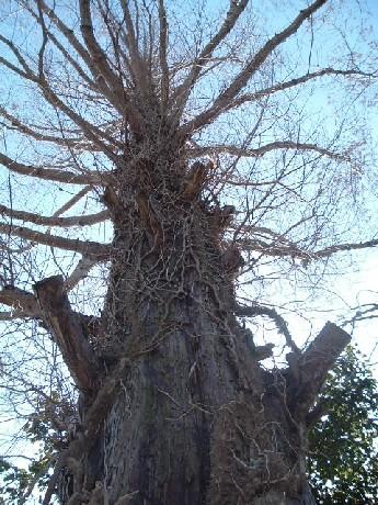 我が家にあるシンボルの木