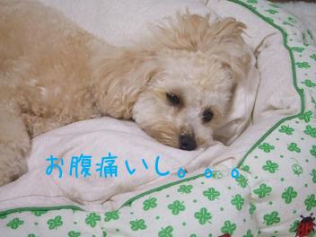 20070620110717.jpg