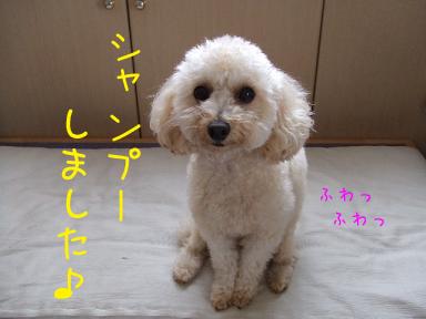 20070912151112.jpg