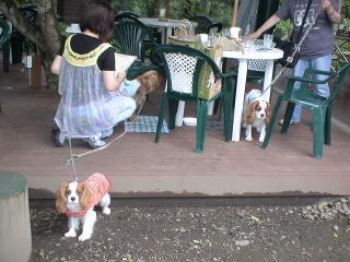 スリードックカフェ