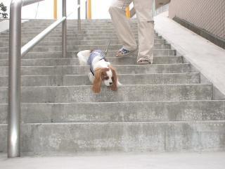 階段、スイスイ~
