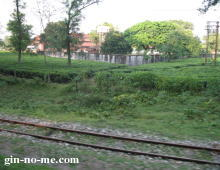 ダージリン・ヒマラヤ鉄道と平行して走る