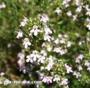 タイムの花 小花がかわいい
