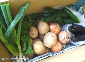 夏の野菜たち